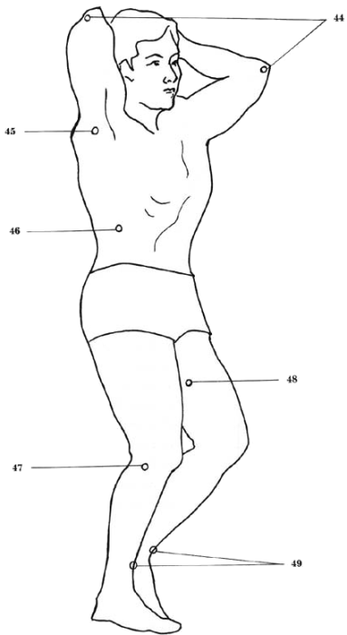 vital spots of the body - side view